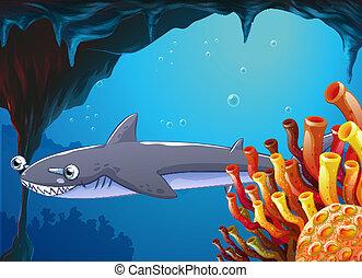 A big fish near the coral reefs