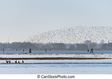 A big flock of birds flying over the lagoon of Venice