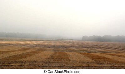 A big open gray rice field that is empty since its...