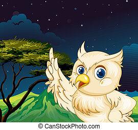 A big owl in the jungle