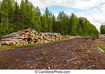 A big pile of wood in a forest road