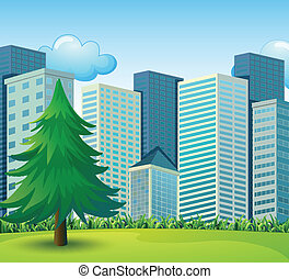 A big pine tree growing near the tall buildings -...