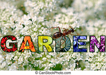 A big red ant explores the word GARDEN spelled in pictures ...