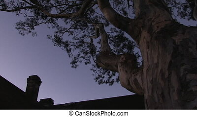 A big spooky tree and a haunted house - A high angle pan to...