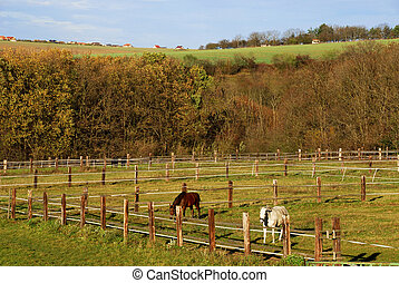 a big wooden corral with autumn landscape