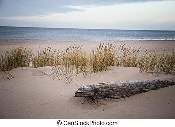 A birch log in the beach dunes