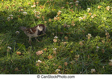 A sparrow sits on the grass.