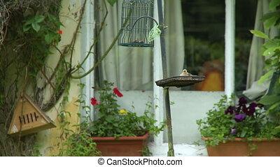 A bird eating from a bird feeder by a window
