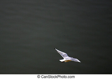 flying over the river