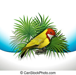 A bird - Illustration of a bird on a white background