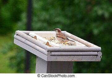 A bird in a feeder