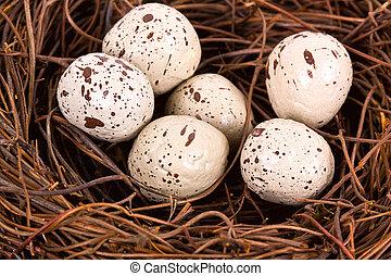 A bird nest with six eggs isolated