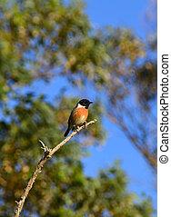 A bird on a branch