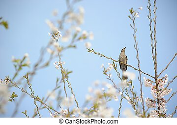 a bird on a branch of cherry tree
