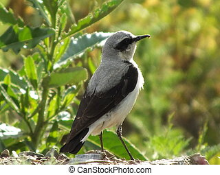 A bird on the blurred background