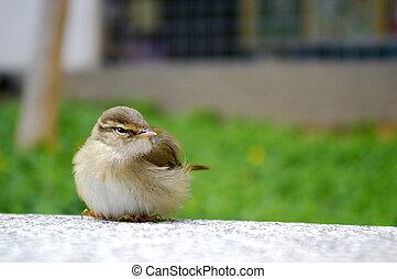 A bird on the floor