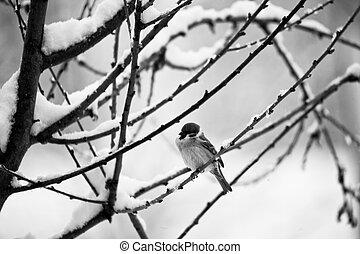 a bird on the snow