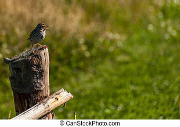 bird perched on a wooden post
