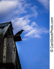 a bird sitting on the birdhouse on a blue background in the spring clear day