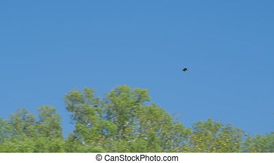 A bird soaring in the blue sky above the trees