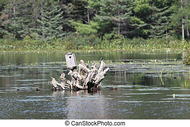 A birdhouse on a stump in a lake