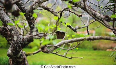 A birdhouse on the tree. A homemade birdhouse made by...