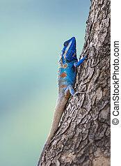 a, blå, ödla, på, den, träd