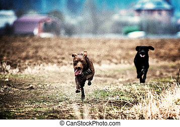a black and brown dog running in a field