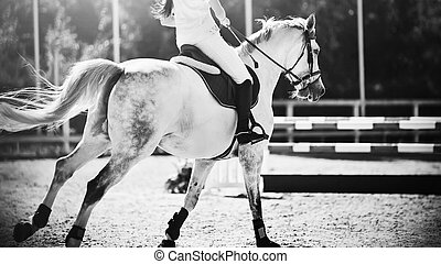 A black-and-white image of a dapple horse with a rider in the saddle galloping and about to jump over the barrier. Equestrian sports. Horse riding.