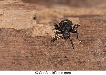 A black beetle