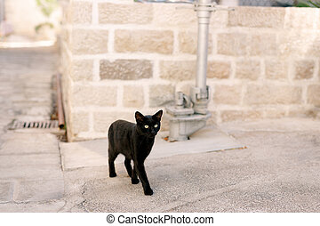 A black cat in the yard on the asphalt stands against the background of a brick wall and a metal pipeline.