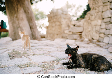 A black cat lies on the road and yawns against a blurred background of a tree trunk and a stone building.