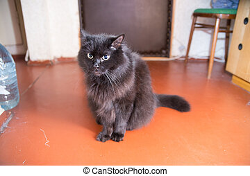 black cat sitting at home on the floor