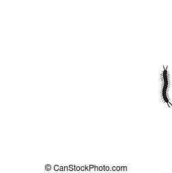 A black centipede