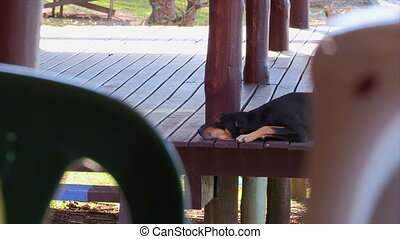 A black dog sleeping - A scenic medium shot of a dog resting...