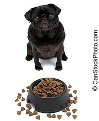 Pug - A black Pug and a dog bowl isolated against a white ...