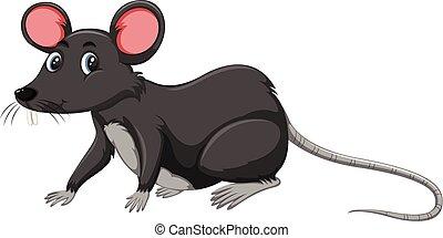 A black rat on white background