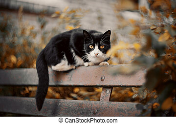 A black scared cat is sitting on a bench.