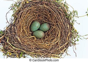 a blackbird eggs in a bird nest - the eggs in a bird's nest ...
