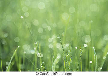 A blade of grass with a drop of dew on a blurred green background of the meadow
