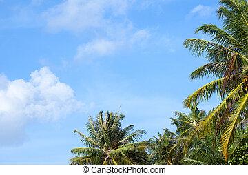 a, blauer himmel, mit, einige, wolkenhimmel, und, a, palmen