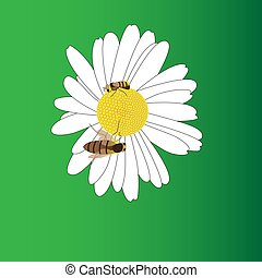 A blooming daisy flower and two bees.