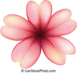 A blooming five-petal flower