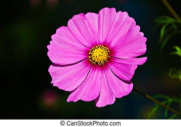 A blossom.