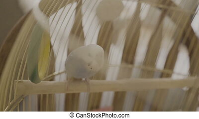 A blue parrot jumps on a cage in the house.