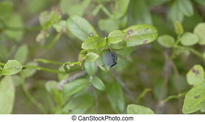 A blueberry plant with a fruit on it