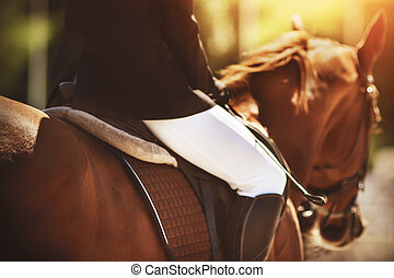 A blurry image with selective focus of a rider in a black jacket riding a chestnut horse, illuminated by a bright light on a summer day.