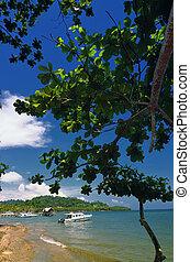 A boat dock on tropical beach