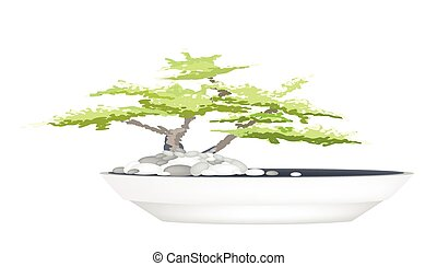A Bonsai Tree in Flower Pot on White Background