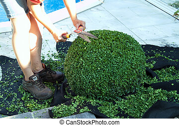 A directory tree is cut by a gardener to a ball